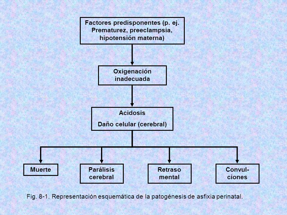 Oxigenación inadecuada Daño celular (cerebral)