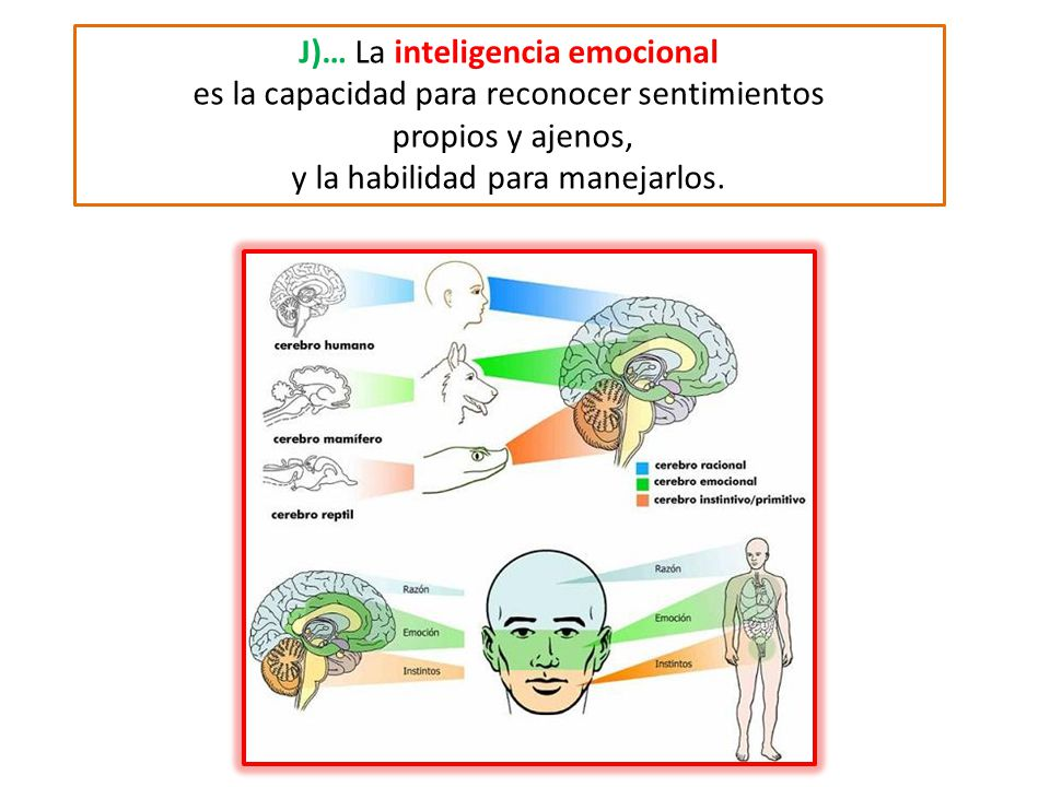 J)… La inteligencia emocional