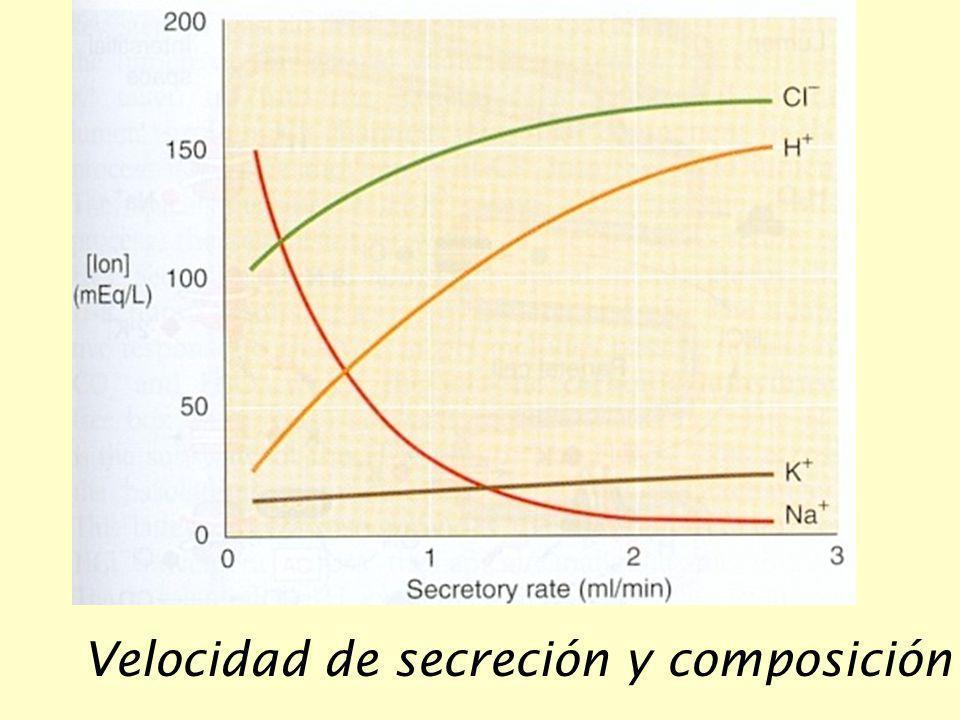 Velocidad de secreción y composición