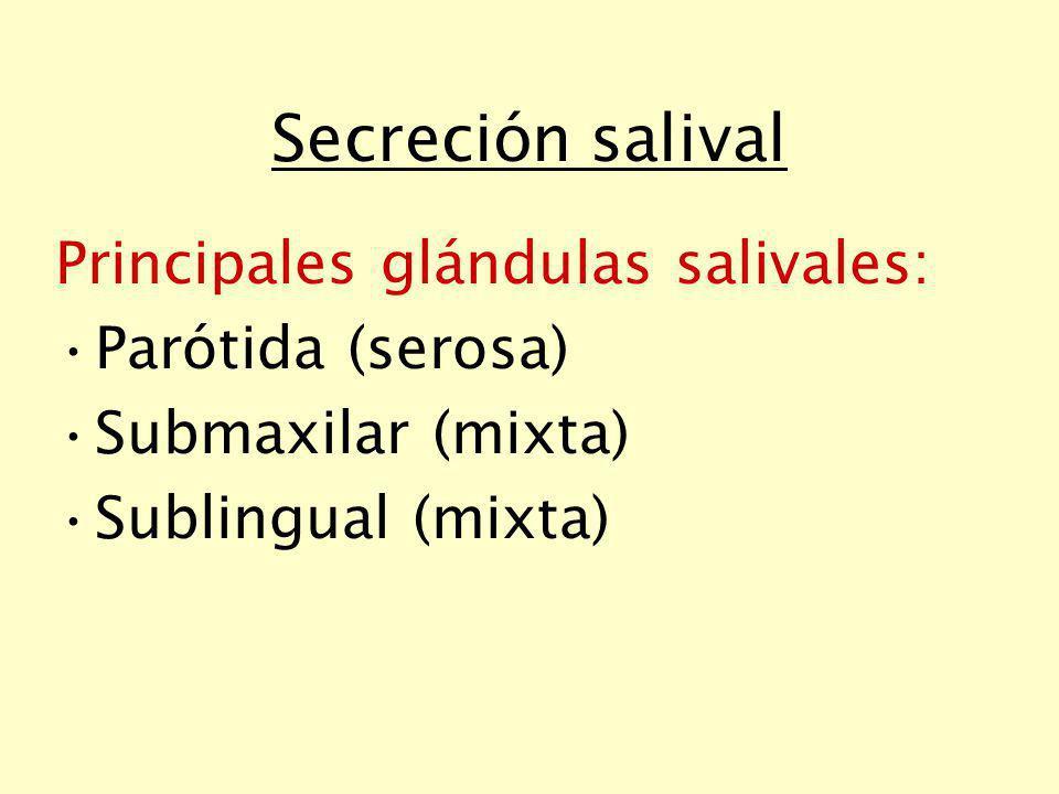 Secreción salival Principales glándulas salivales: Parótida (serosa)