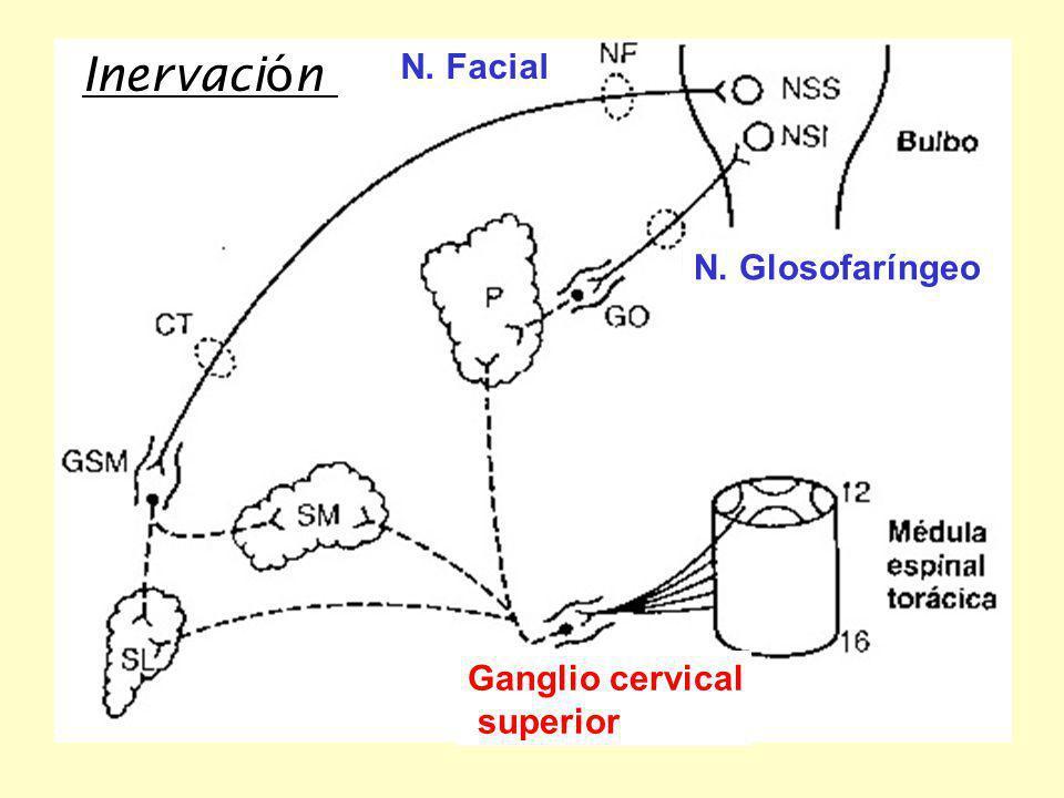 Inervación N. Facial N. Glosofaríngeo Ganglio cervical superior