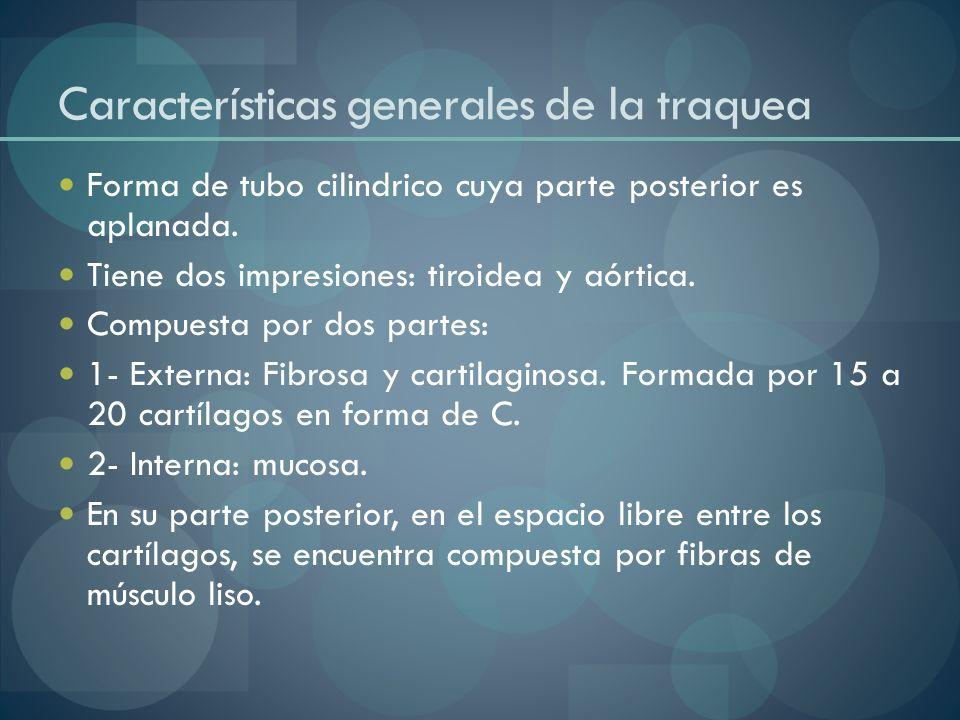 Características generales de la traquea