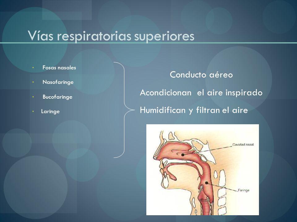 Vías respiratorias superiores