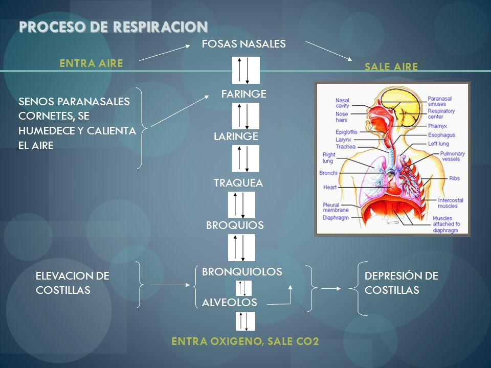 PROCESO DE RESPIRACION