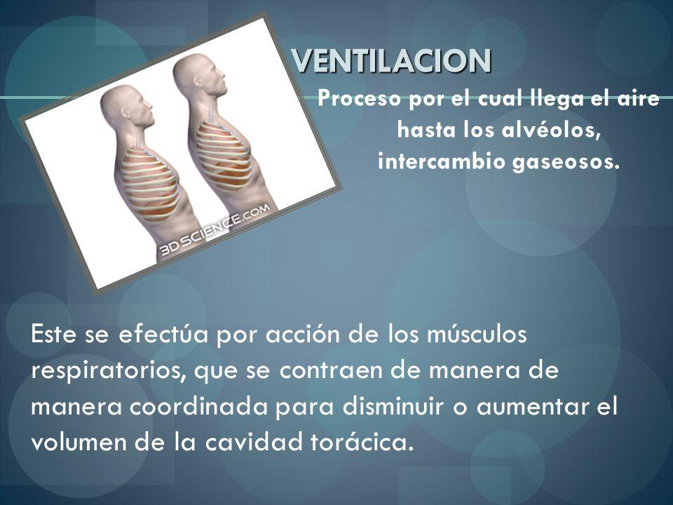VENTILACION Proceso por el cual llega el aire hasta los alvéolos, intercambio gaseosos.