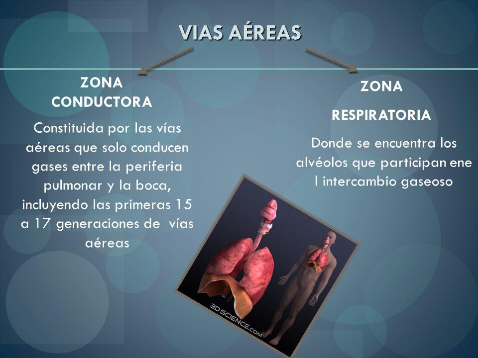 VIAS AÉREAS ZONA CONDUCTORA ZONA RESPIRATORIA