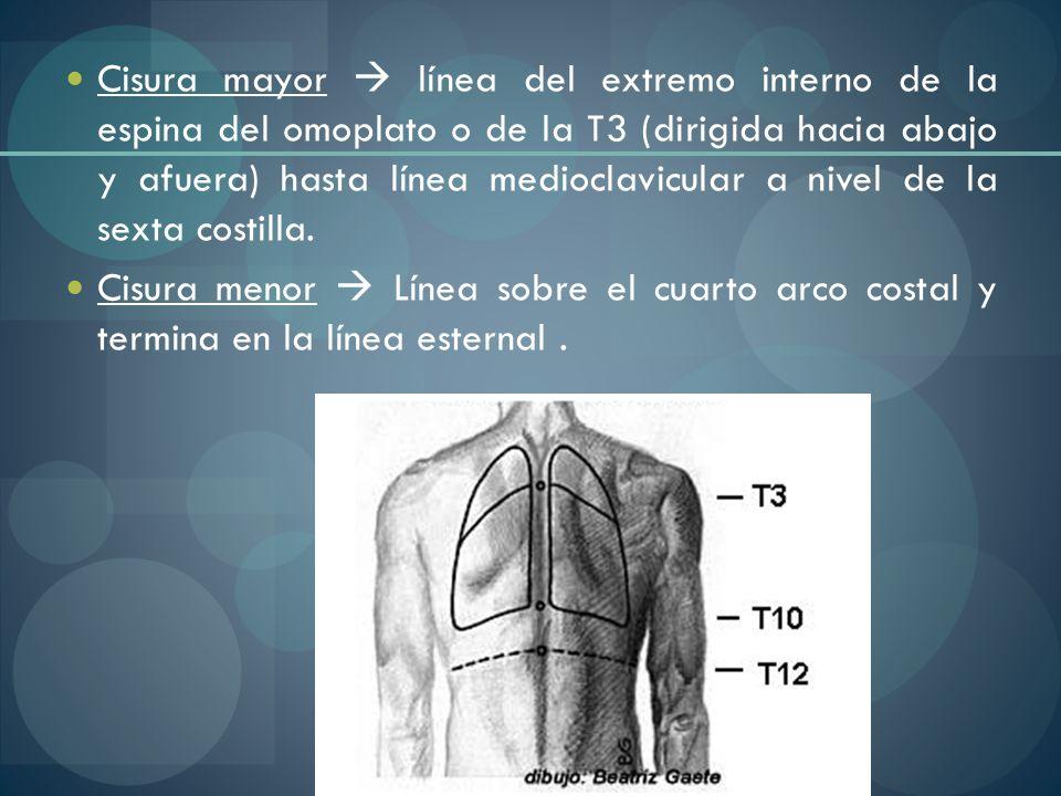 Cisura mayor  línea del extremo interno de la espina del omoplato o de la T3 (dirigida hacia abajo y afuera) hasta línea medioclavicular a nivel de la sexta costilla.