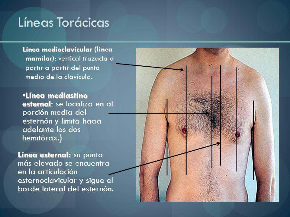 Líneas Torácicas Línea medioclavicular (línea mamilar): vertical trazada a partir a partir del punto medio de la clavícula.