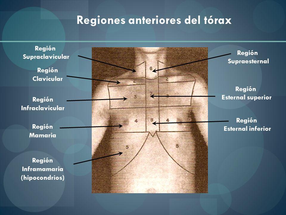 Regiones anteriores del tórax