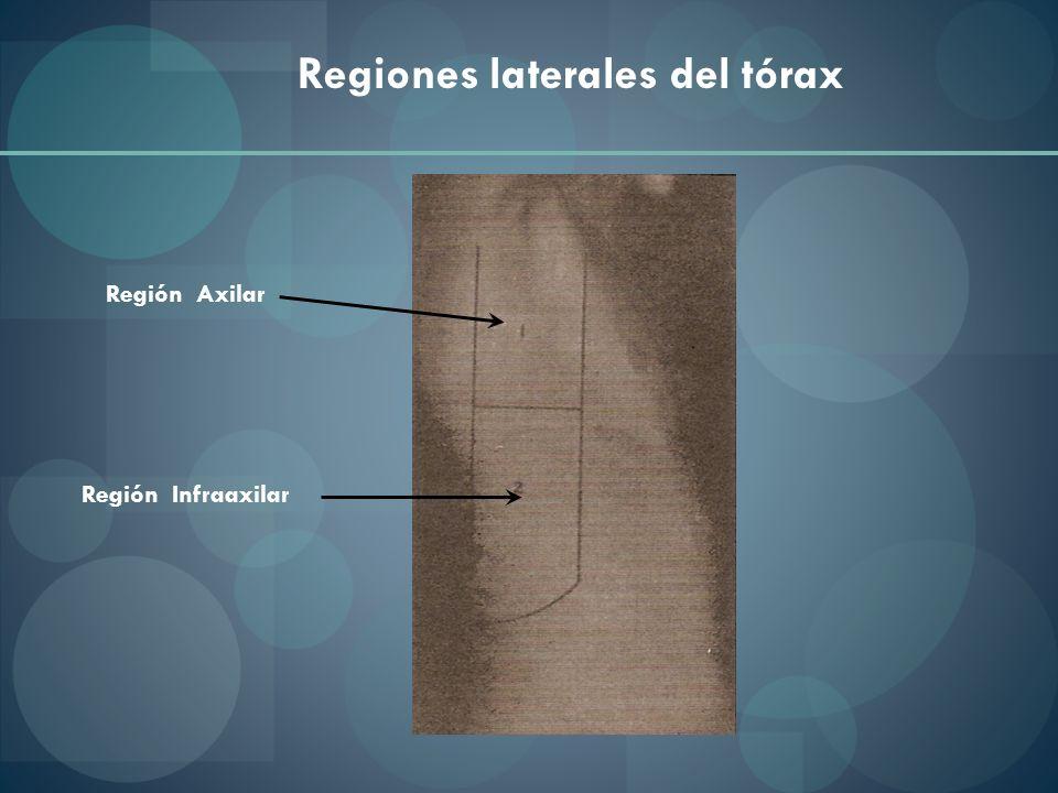 Regiones laterales del tórax
