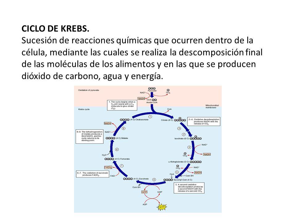 CICLO DE KREBS.