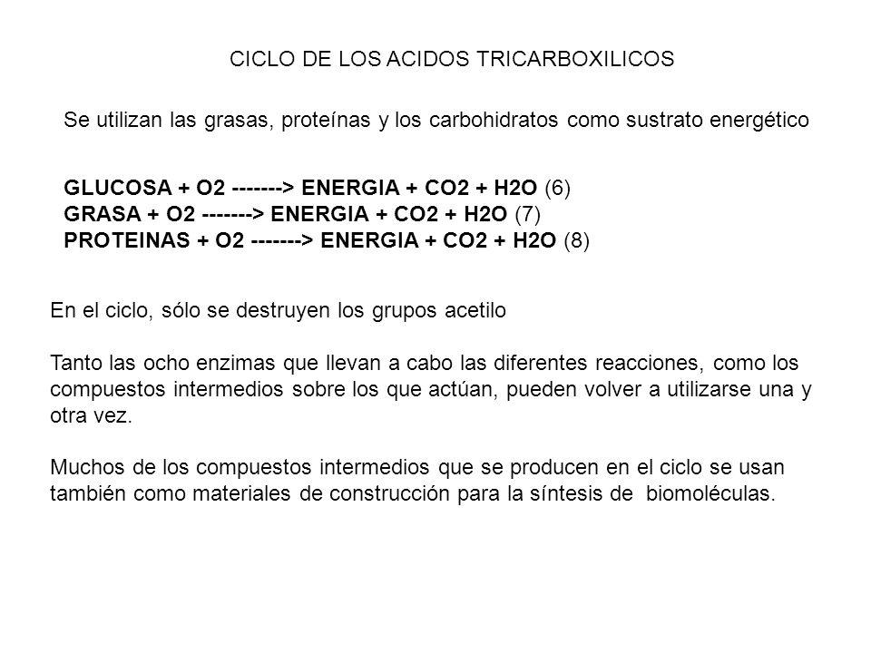 CICLO DE LOS ACIDOS TRICARBOXILICOS