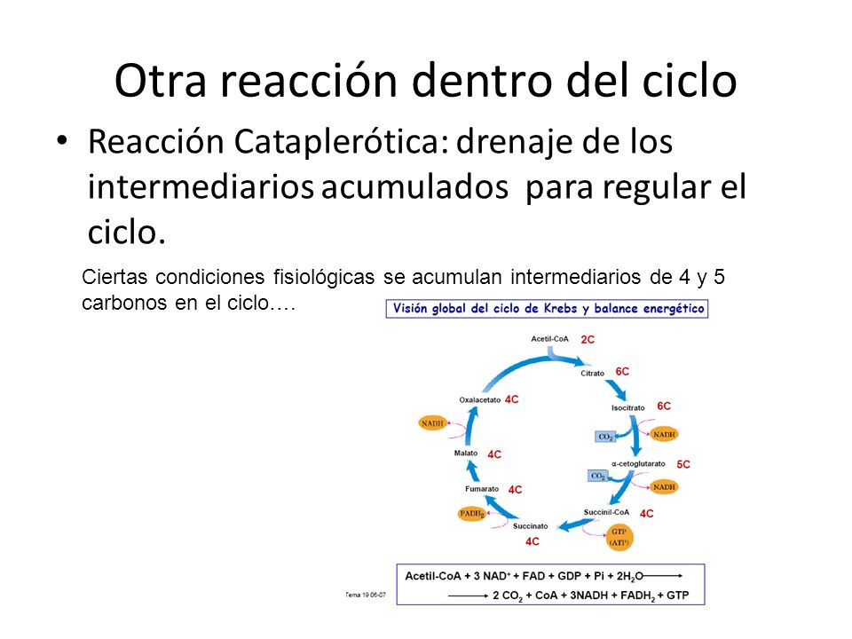 Otra reacción dentro del ciclo