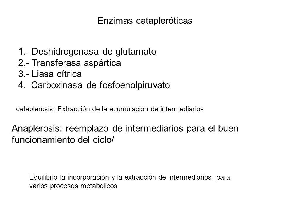 Enzimas catapleróticas
