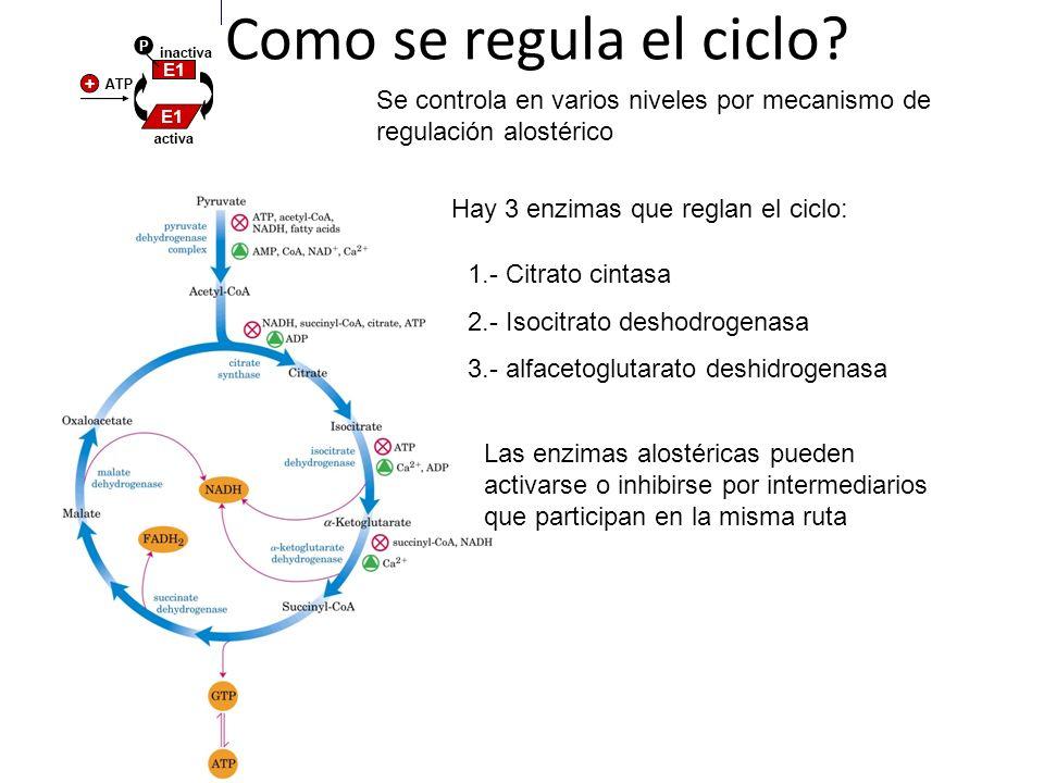 ¿Como se regula el ciclo