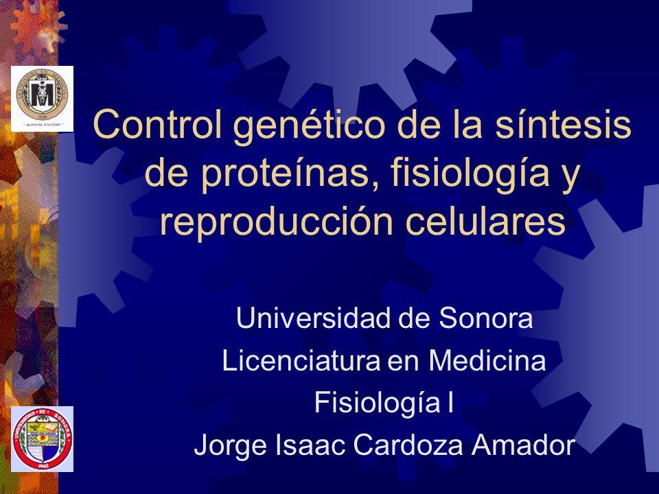 Control genético de la síntesis de proteínas, fisiología y reproducción celulares