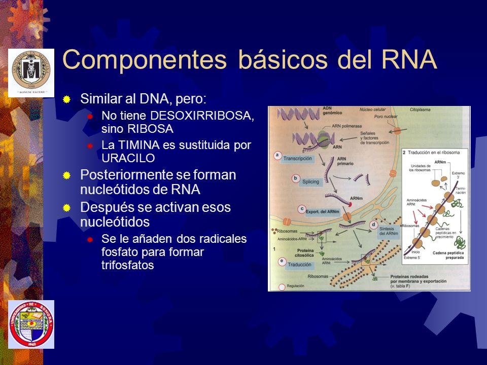 Componentes básicos del RNA