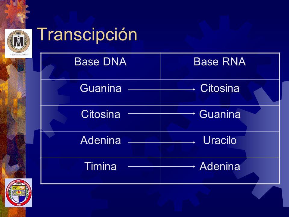 Transcipción Base DNA Base RNA Guanina Citosina Adenina Uracilo Timina