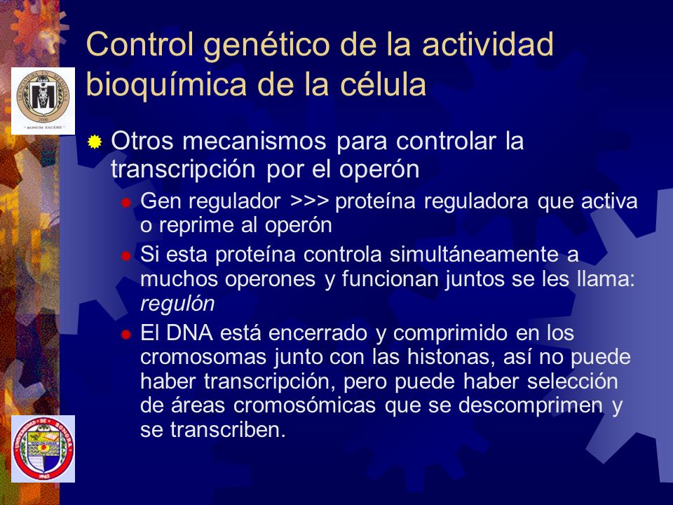Control genético de la actividad bioquímica de la célula