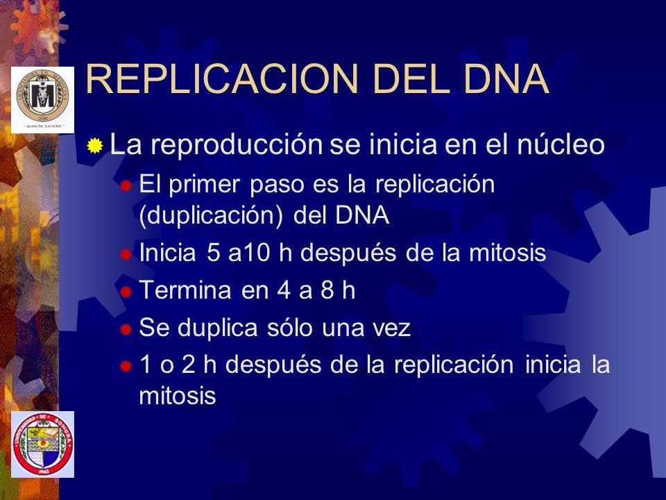 REPLICACION DEL DNA La reproducción se inicia en el núcleo