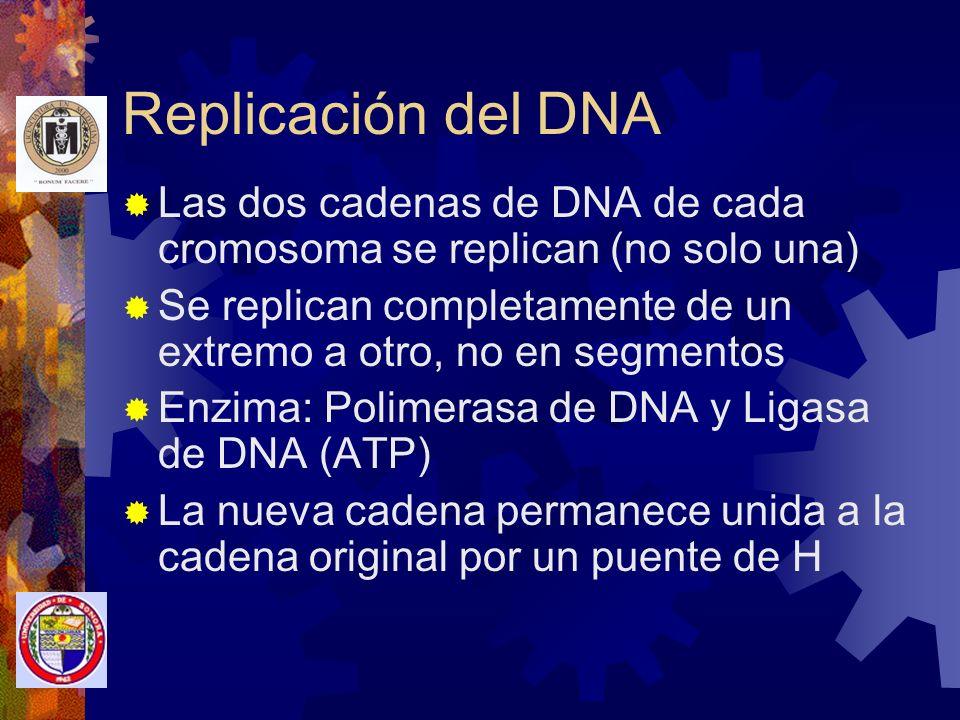 Replicación del DNA Las dos cadenas de DNA de cada cromosoma se replican (no solo una)