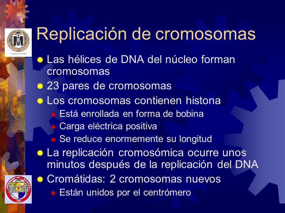 Replicación de cromosomas