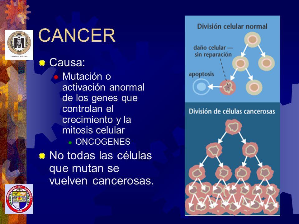 CANCER Causa: No todas las células que mutan se vuelven cancerosas.