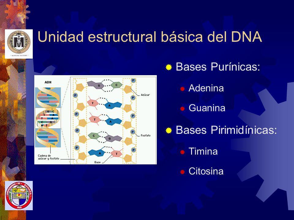 Unidad estructural básica del DNA