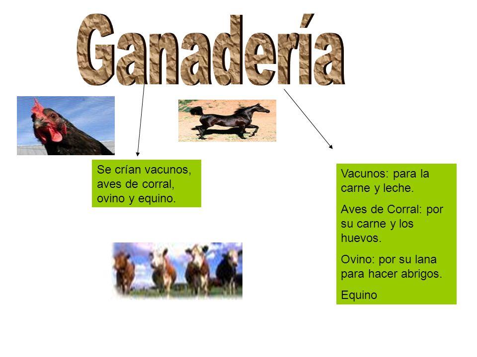 Ganadería Se crían vacunos, aves de corral, ovino y equino.