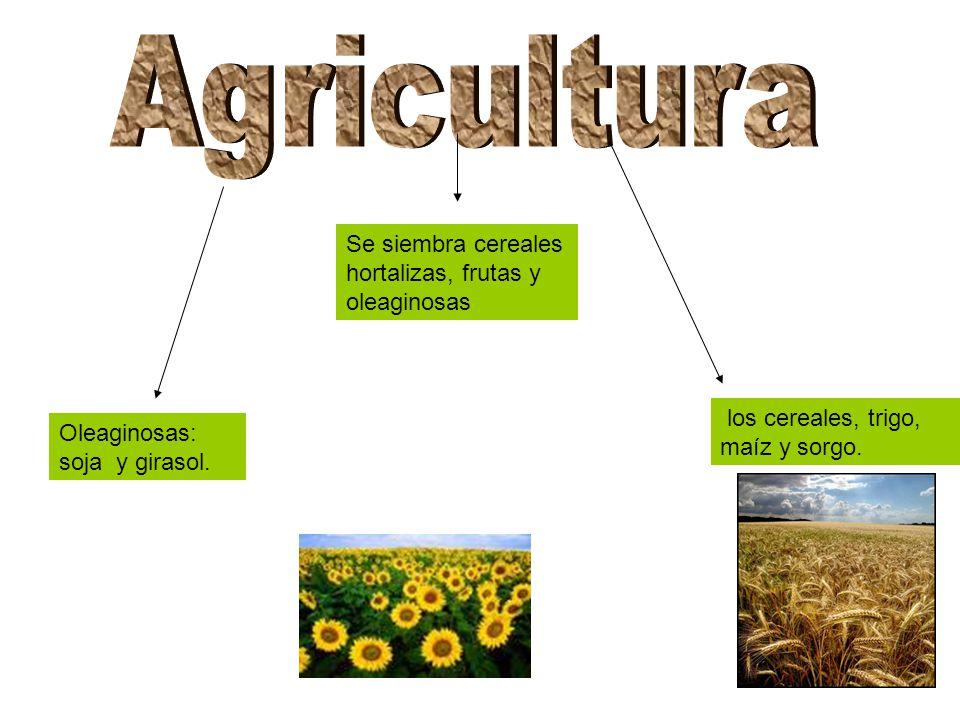 Agricultura Se siembra cereales hortalizas, frutas y oleaginosas