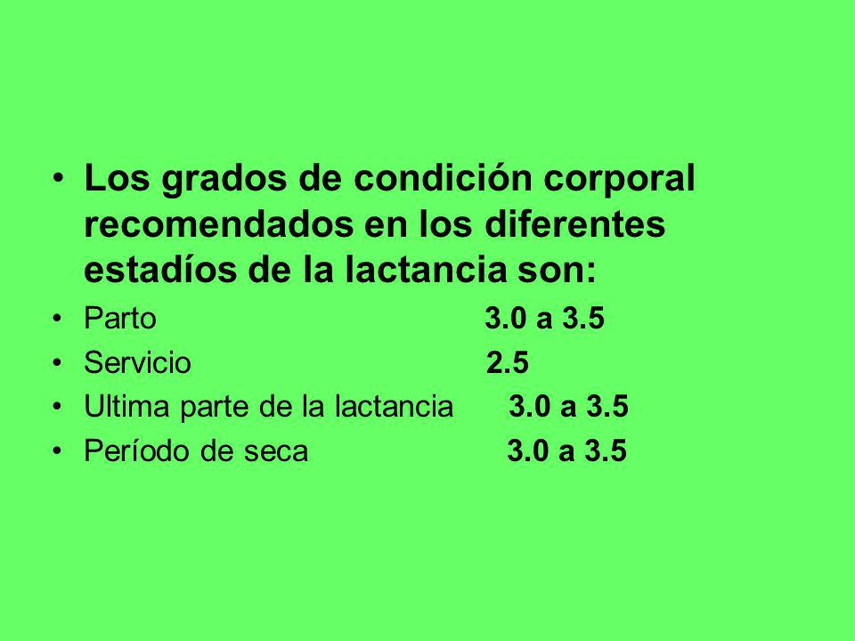 Los grados de condición corporal recomendados en los diferentes estadíos de la lactancia son: