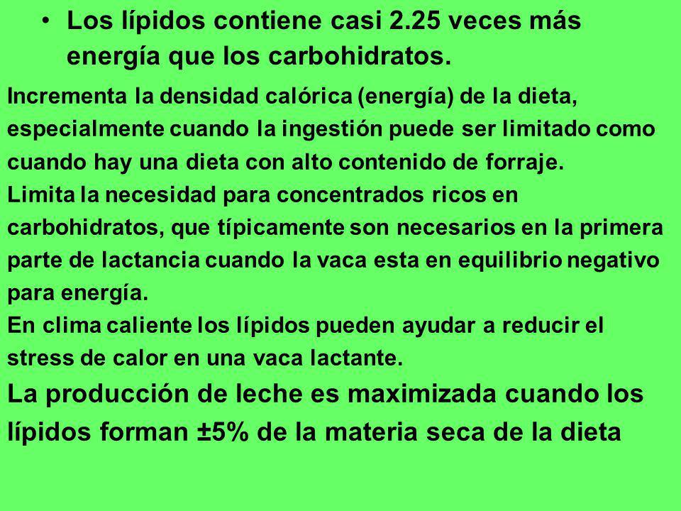 Los lípidos contiene casi 2.25 veces más energía que los carbohidratos.