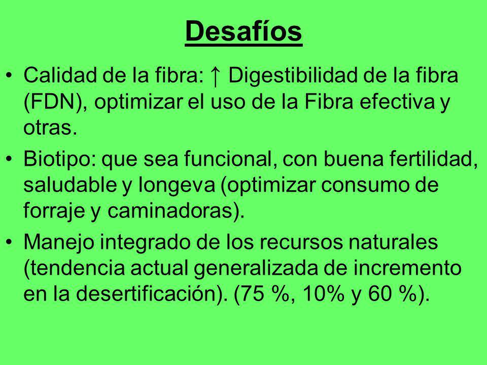 Desafíos Calidad de la fibra: ↑ Digestibilidad de la fibra (FDN), optimizar el uso de la Fibra efectiva y otras.