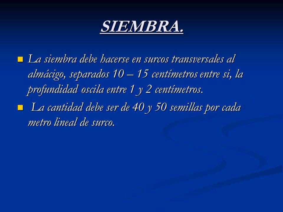 SIEMBRA.