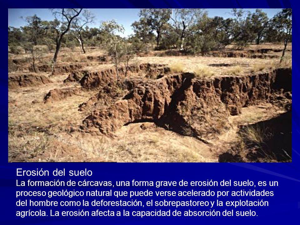 Erosión del suelo.