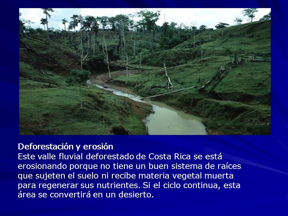 Deforestación y erosión