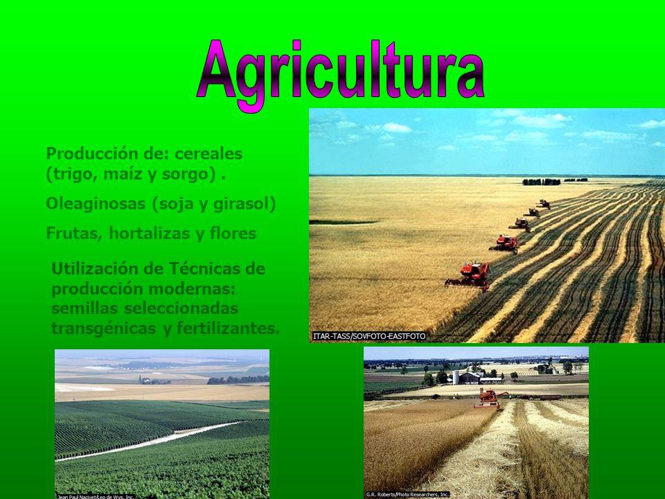 Agricultura Producción de: cereales (trigo, maíz y sorgo) .