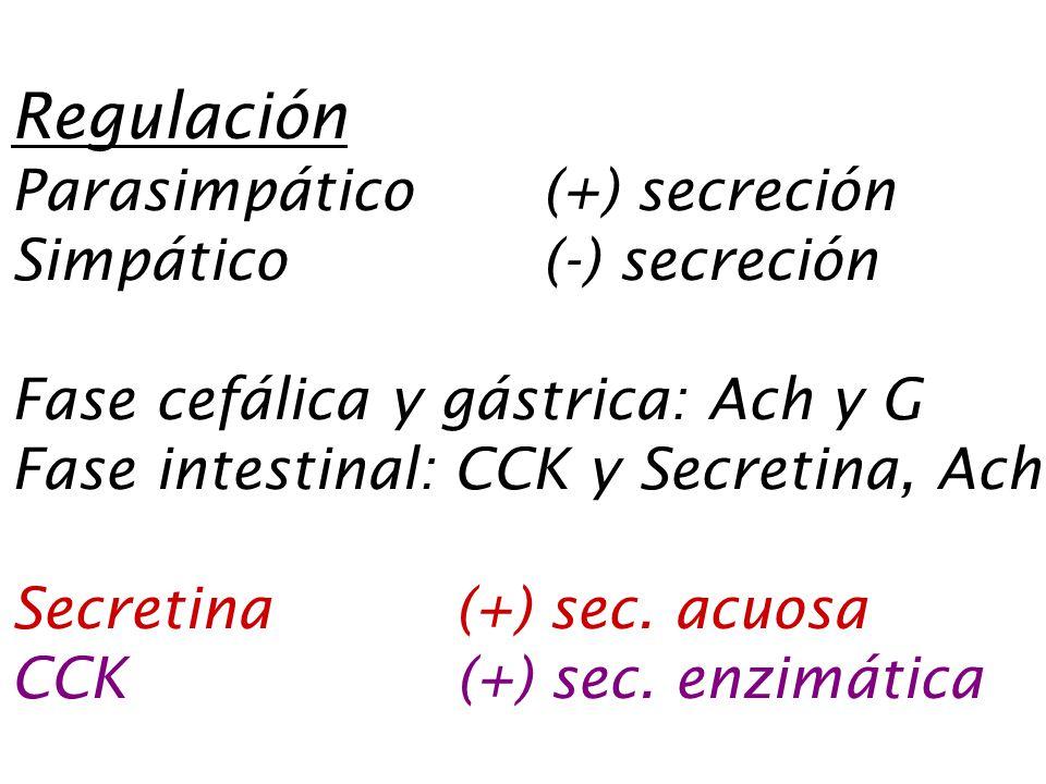 Regulación Parasimpático (+) secreción Simpático (-) secreción