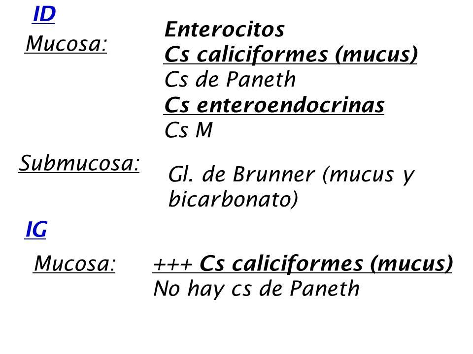 ID Enterocitos. Cs caliciformes (mucus) Cs de Paneth. Cs enteroendocrinas. Cs M. Mucosa: Submucosa: