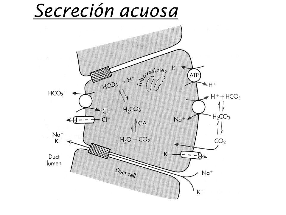 Secreción acuosa
