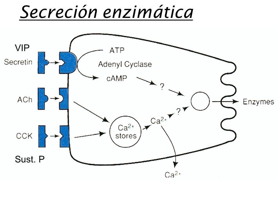 Secreción enzimática VIP Sust. P