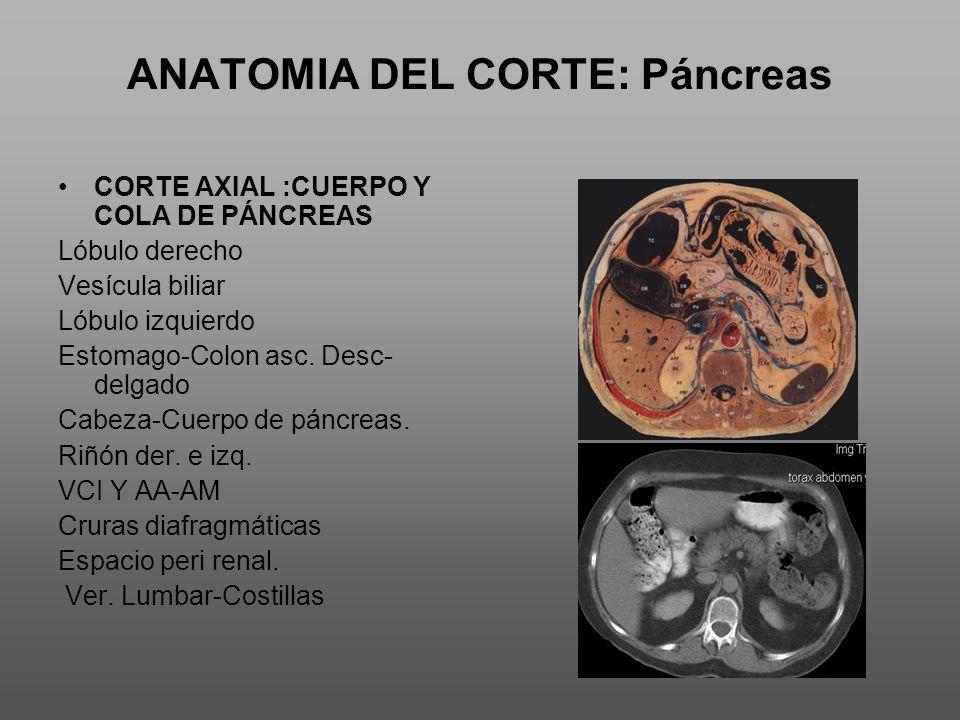 ANATOMIA DEL CORTE: Páncreas