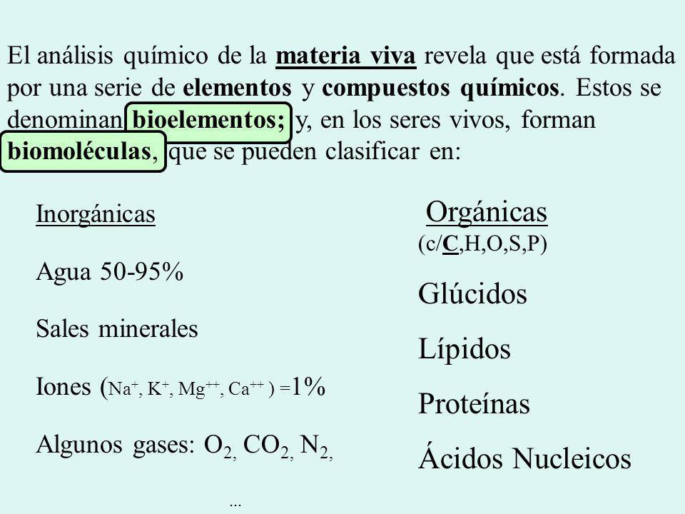 Orgánicas (c/C,H,O,S,P) Glúcidos Lípidos Proteínas Ácidos Nucleicos