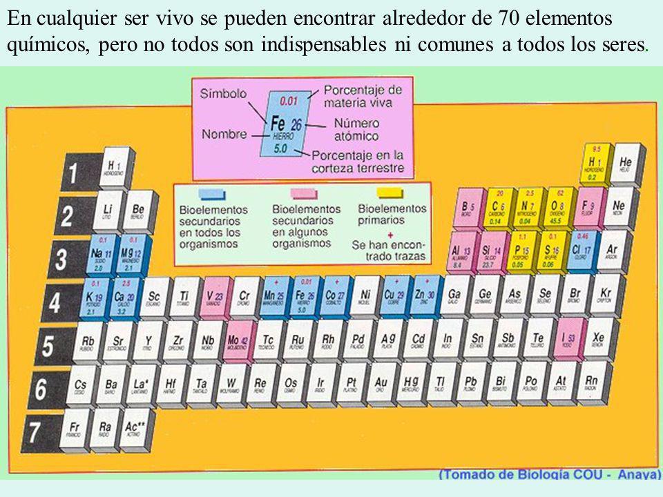 En cualquier ser vivo se pueden encontrar alrededor de 70 elementos químicos, pero no todos son indispensables ni comunes a todos los seres.