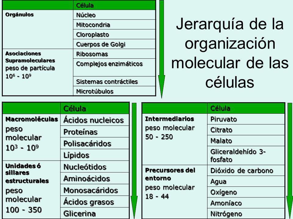 Jerarquía de la organización molecular de las células