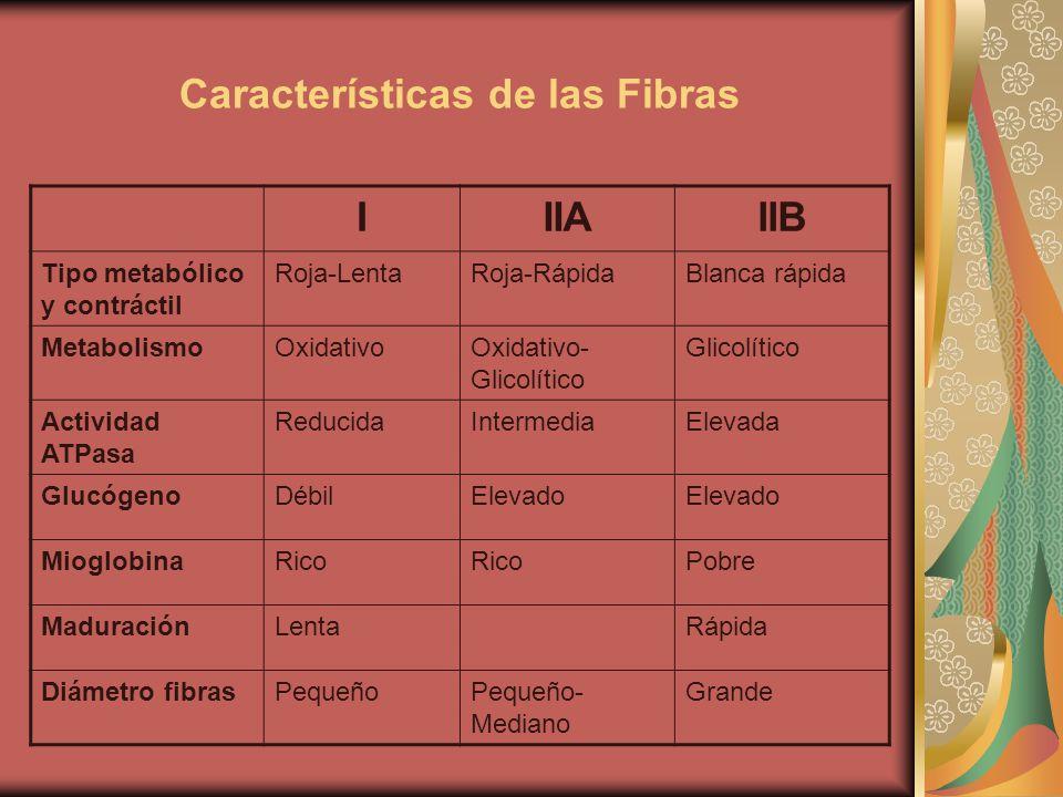 Características de las Fibras