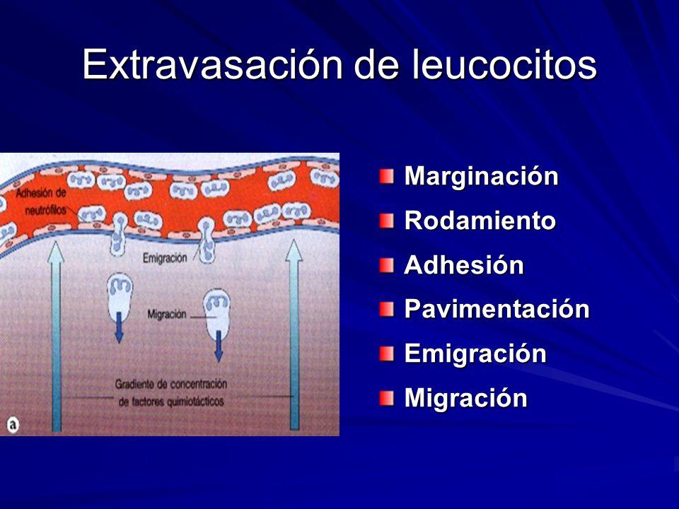 Extravasación de leucocitos