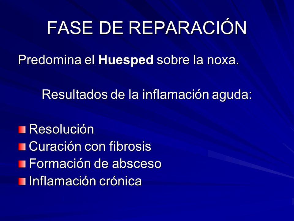 Resultados de la inflamación aguda: