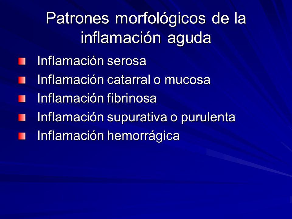 Patrones morfológicos de la inflamación aguda