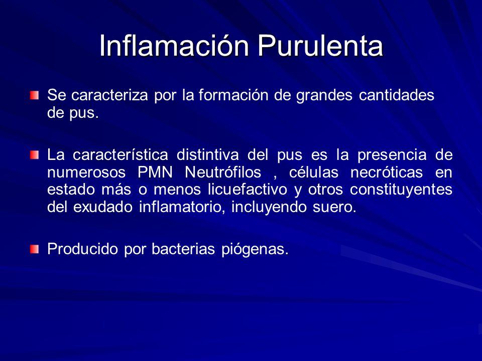 Inflamación Purulenta